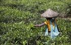 Bangladesh is among Unilever's tea suppliers, it reveals in drive for slave-free sourcing