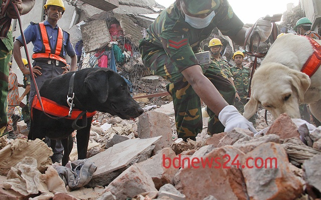 Rescuers use trained dogs on Tuesday to find dead bodies from the heaps of debris of a high-rise building that collapses in Savar on Apr 24.