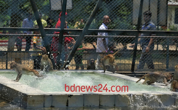 Monkeys in the Dhaka Zoo chill out on Tuesday.
