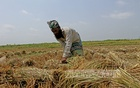 BB revises lending rate on Tk 50bn farmers' stimulus down to 4pc
