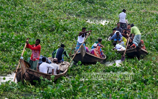 Boatmen struggle to cross the Buriganga River as water hyacinths cover this part of the river near Shoari Ghat on Tuesday. Photo: mustafiz mamun/ bdnews24.com