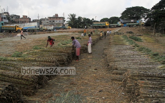 A sugarcane market at Mirpur's Diabarhi locality is abuzz with people on Sunday. Photo: asif mahmud ove/ bdnews24.com
