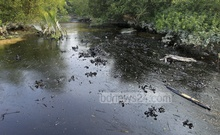 Environmentalists fear the oil spill will endanger the mangrove forest's fragile ecology