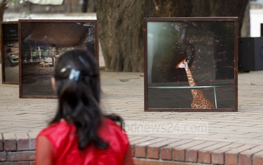 A visitor at photographer Tapas Pal's photo exhibition on 'A Pause to Breath . . . '. Photo: nayan kumar/ bdnews24.com
