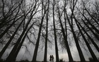 Girls walk beneath a row of parched tress on a winter day in the outskirts of Jammu Feb 12, 2012. Reuters