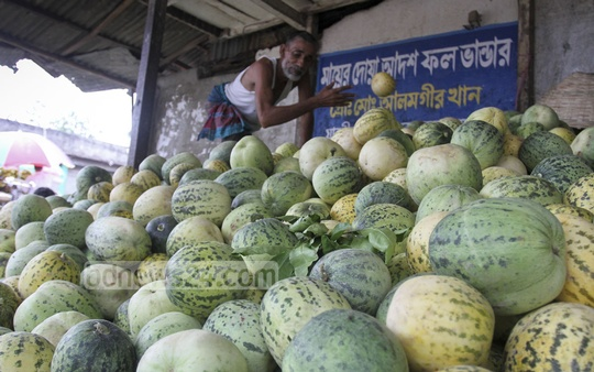 Melons from Magura on sale at Karwan Bazar on Monday. Though not a seasonal fruit, large quantities of it are sold in summer because of its cooling effects. Photo: tanvir ahammed