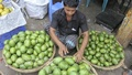 Green mangoes, a key ingredient of pickles in Bangladesh, being sold at Karwan Bazar on Monday. Photo: tanvir ahammed