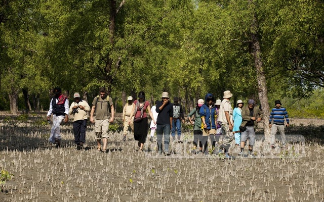 Image Sundarbans set to reopen to tourists on Sept 1