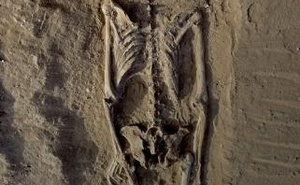 The skeleton of a man, found lying prone in the sediments of a lagoon 30km west of Lake Turkana, Kenya, at a place called Nataruk, is pictured in this undated handout photo obtained by Reuters.