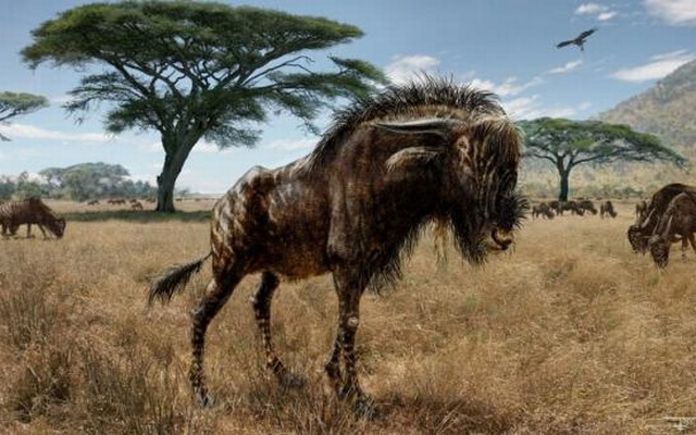 An artist's interpretation of Rusingoryx atopocranion on the Late Pleistocene plains of what is now Rusinga Island, Lake Victoria is seen in an undated illustration courtesy of Todd S. Marshall. Scientists said on February 4, 2016, that fossils unearthed in Kenya showed that... Reuters