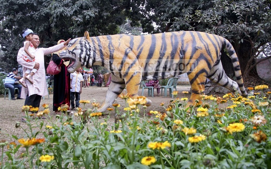 A guardian showing sculpture of tiger to children at a programme titled 'A day for tigers' at the Dhaka University's Faculty of Fine Arts on Friday. Photo: tanvir ahammed