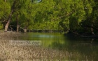 Bangladesh risks Sundarbans getting listed as World Heritage in danger