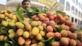Litchis from Gazipur are on display in a shop at Dhaka's Sadarghat on Thursday. The shopkeeper is charging Tk 200-220 for 100 litchis.