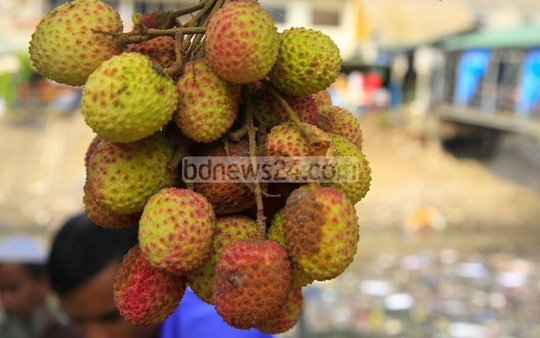 Litchis are on display in a shop at Dhaka's Sadarghat on Thursday. The traders say litchis have been smaller this year and some have dried due to a lack of rain. Photo: mostafigur rahman