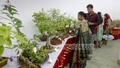 The week-long exhibition at Dhaka University has more than 200 types of bonsai plants. Photo: abdul mannan
