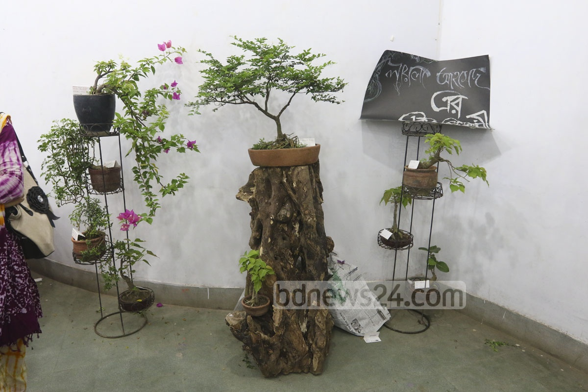 Beautiful bonsai for Different kinds of bonsai trees