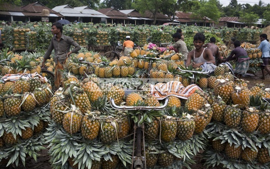 Farmers waiting for customers at Jalchhatra. They are charging Tk 800-1,500 for 100 pineapples.
