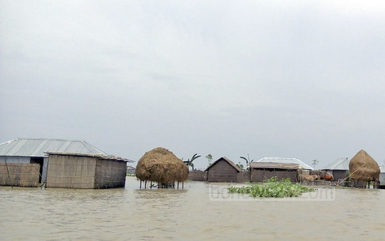Flood waters inundate Mashaldanga Char village in Kurigram.