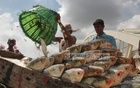 Bangladesh takes Tk 2.5bn project to generate jobs, boost Hilsa production