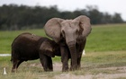 Wildlife populations plunge almost 60 percent since 1970: WWF