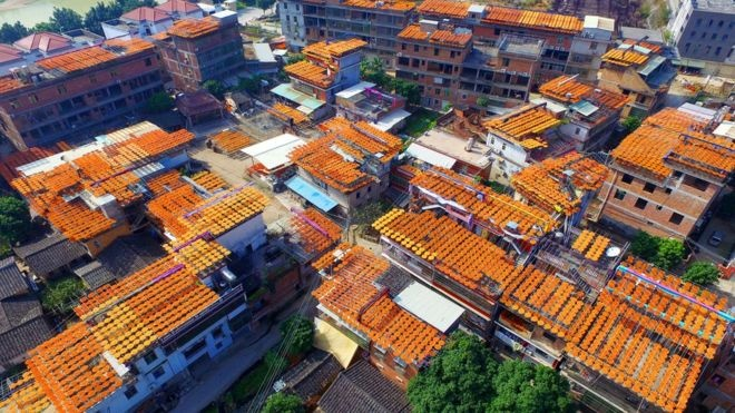 Stunning aerial images have revealed a sea of persimmons on rooftops in Quanzhou city in China's southeast. reuters