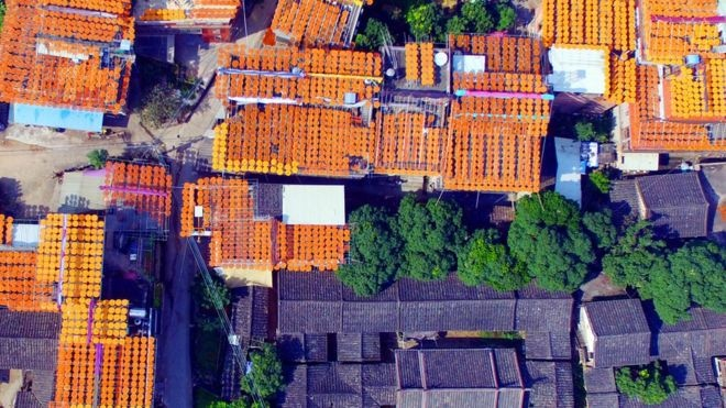 Every year, locals make use of strong sun rays and lay out their fruits to dry before they sell them at market. reuters