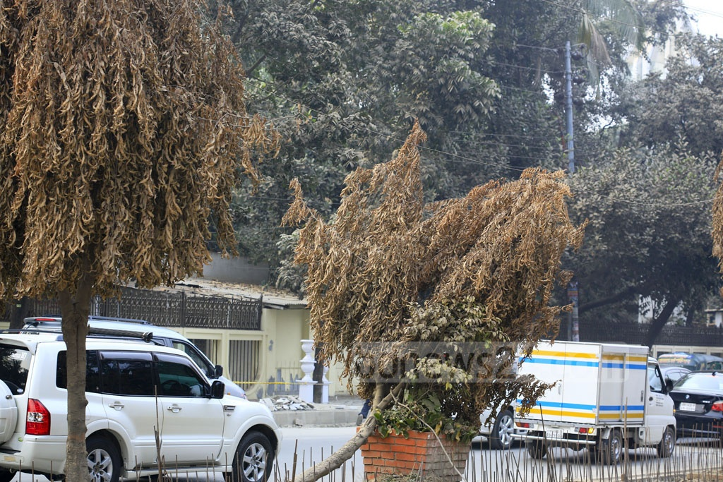 The trees on the road divider from Gulshan-1 to Gulshan-2 are dying as no step has been taken to save them while repairing the divider.