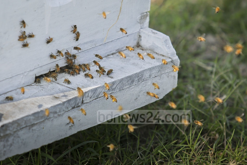 The slit allows the bees to enter the beehives. Photo: asaduzzaman pramanik