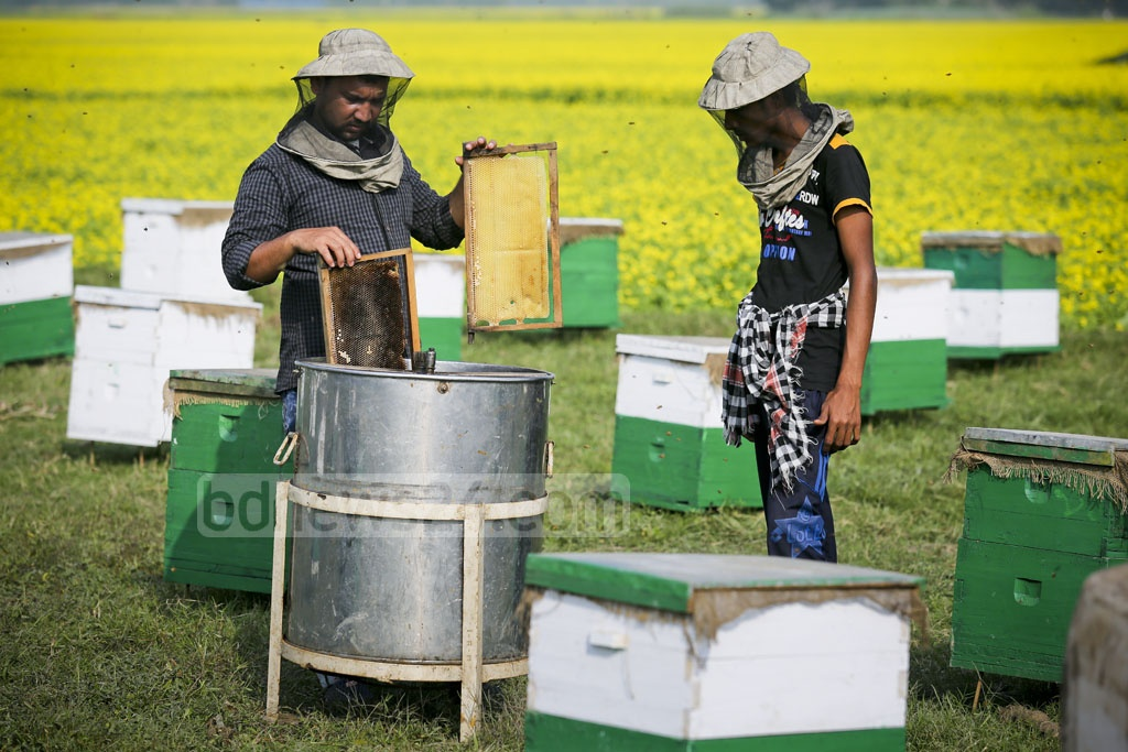 Beekeepers process honey by putting these frames inside a machine. Photo: asaduzzaman pramanik