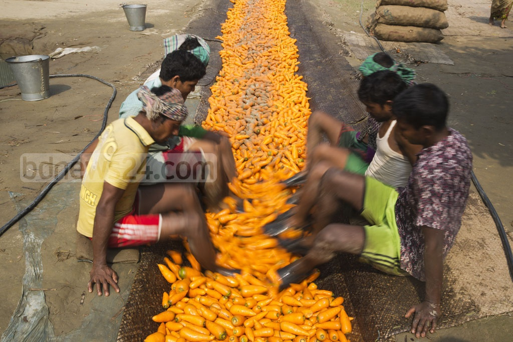 Workers at Singair using water and their feet to rub soil from the carrots. Photo: mostafigur rahman