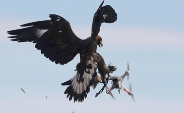 A golden eagle grabs a flying drone during a military training exercise at Mont-de-Marsan French Air Force base, Southwestern France, February 10, 2017. Reuters