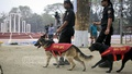 RAB's dog squad searches the ground at Dhaka's Central Shaheed Minar on Monday, the day before International Mother Language Day. Photo: asaduzzaman pramanik