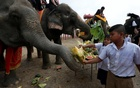 Thailand lays out buffet for elephants in national celebration