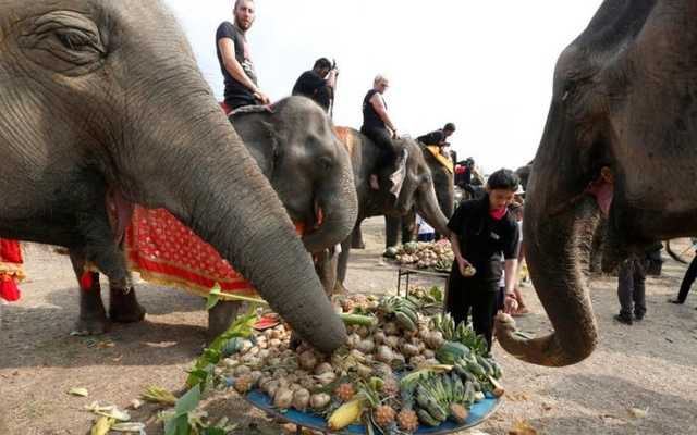 A student feeds elephants during Thailand's national elephant day celebration in the ancient city of Ayutthaya March 13, 2017. Reuters
