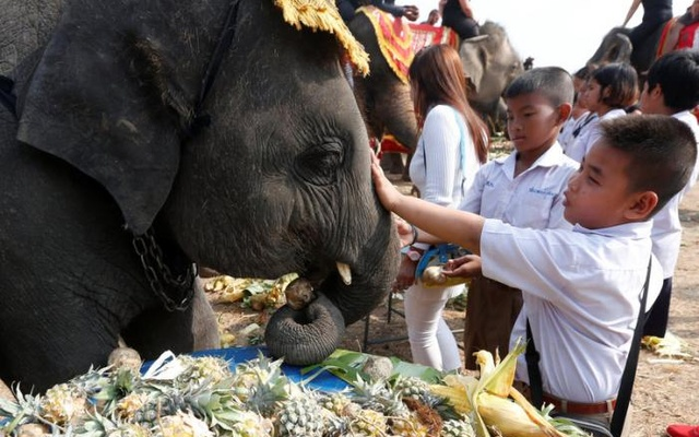 Students feed elephants during Thailand's national elephant day celebration in the ancient city of Ayutthaya March 13, 2017. Reuters