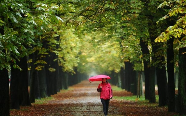 FILE PHOTO: A woman enjoys a walk along an avenue of trees at Prater recreation area on a rainy autumn day in Vienna, Austria, October 16, 2015. Reuters
