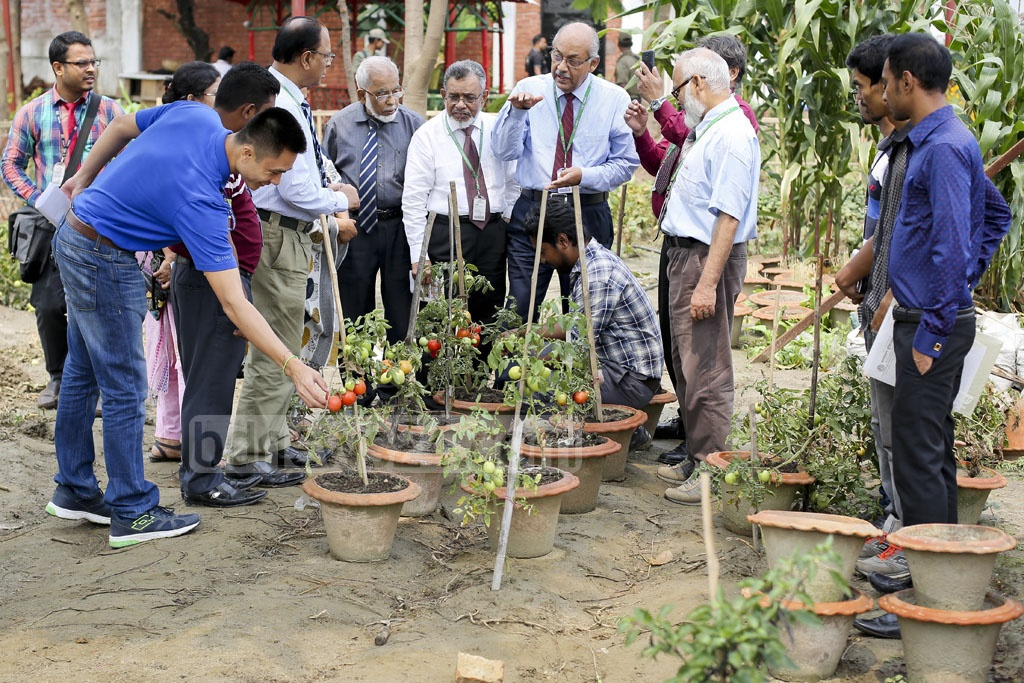 Prof Dr AM Farooque tells colleagues about the 'Tomaloo' plant at the IUBAT University's research field. Photo: asaduzzaman pramanik