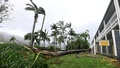 A tree lies on the ground near a motel after falling during strong winds from Cyclone Debbie at Airlie Beach, located south of the northern Australian city of Townsville, March 28, 2017. Reuters
