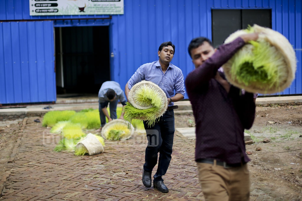 The carpets of hydroponically grown fodder are also easy to roll and carry. Photo: asaduzzaman pramanik