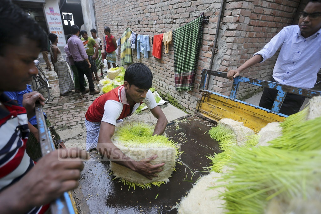 The grasses grown without soil are taken to a cattle farm at Berhibandh area in the capital's Mohammadpur. Photo: asaduzzaman pramanik
