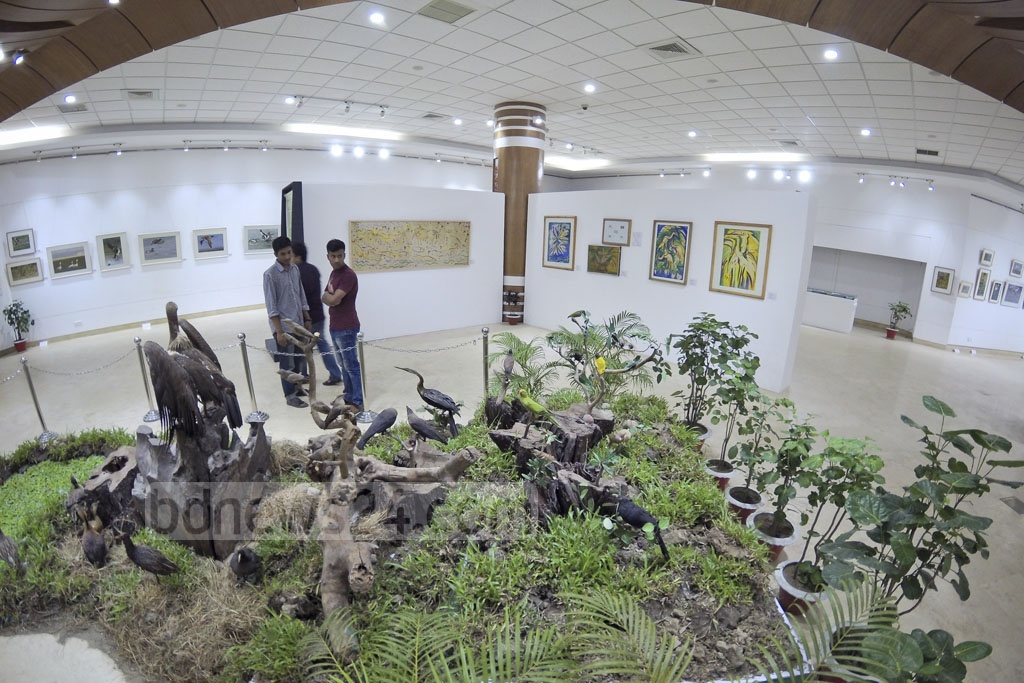Stuffed birds are exhibited at Bangladesh: The Land of Birds-2017 at the National Museum on Monday. Photo: asaduzzaman pramanik