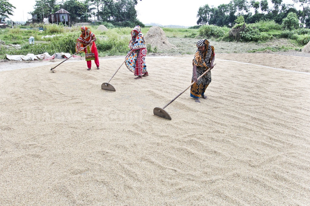 Women lay rice grains out to dry. Photo: asif mahmud ove
