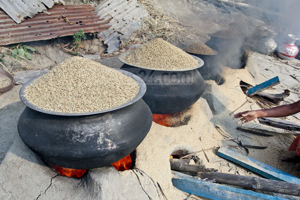 Rice grains boiled at farmers' homes in Manikda village in Demra's Amulia. Photo: asif mahmud ove
