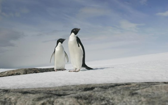 A pair of Adelie penguins are pictured at Cape Denison, Commonwealth Bay. Reuters