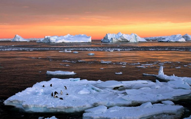 Adelie penguins stand atop ice near the French station at Dumont d�Urville in East Antarctica. Reuters