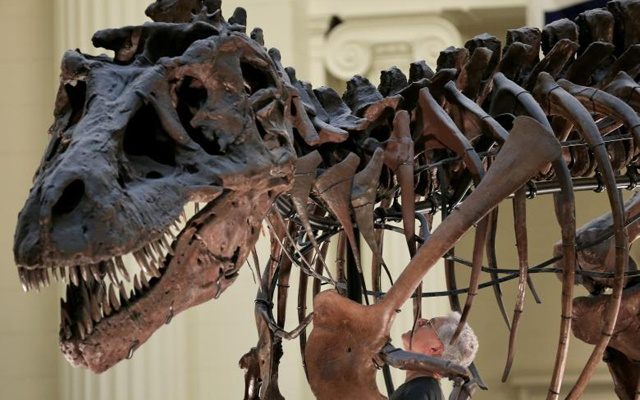 FILE PHOTO - Bill Simpson looks inside a fossil of a Tyrannosaurus rex known as ''SUE'', before removing its forelimb to be used for research at the Field Museum in Chicago, Illinois, U.S. on October 6, 2016. Reuters