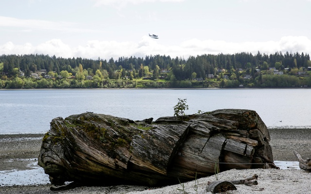 The log where Laura Palmer's body is discovered is pictured outside the Kiana Lodge, one of the locations for the 'Twin Peaks' television series, in Poulsbo, Washington, U.S. April 27, 2017. Picture taken April 27, 2017. Reuters