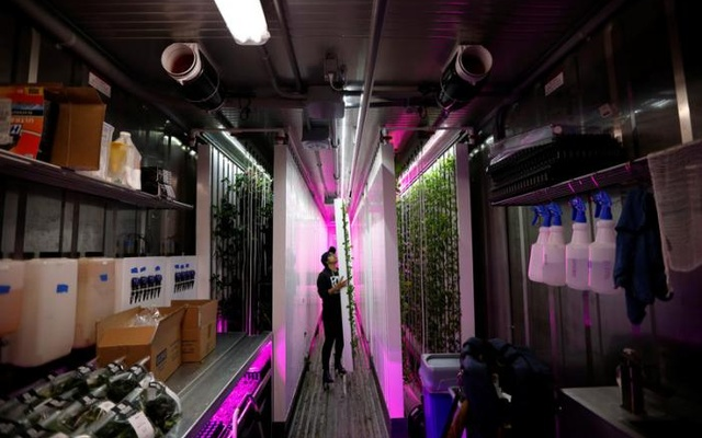 Farmer Nabeela Lakhani works on racks of greens growing inside her hydroponic climate controlled farm, one of 10 re-purposed 320-square-foot metal shipping containers where entrepreneur farmers enrolled in the 'Square Roots' farming program are growing and selling a variety of greens in the Brooklyn Borough of New York City, US, on May 5, 2017. Reuters