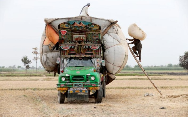Workers load straw onto a decorated truck outside Faisalabad, Pakistan, May 3, 2017. Reuters