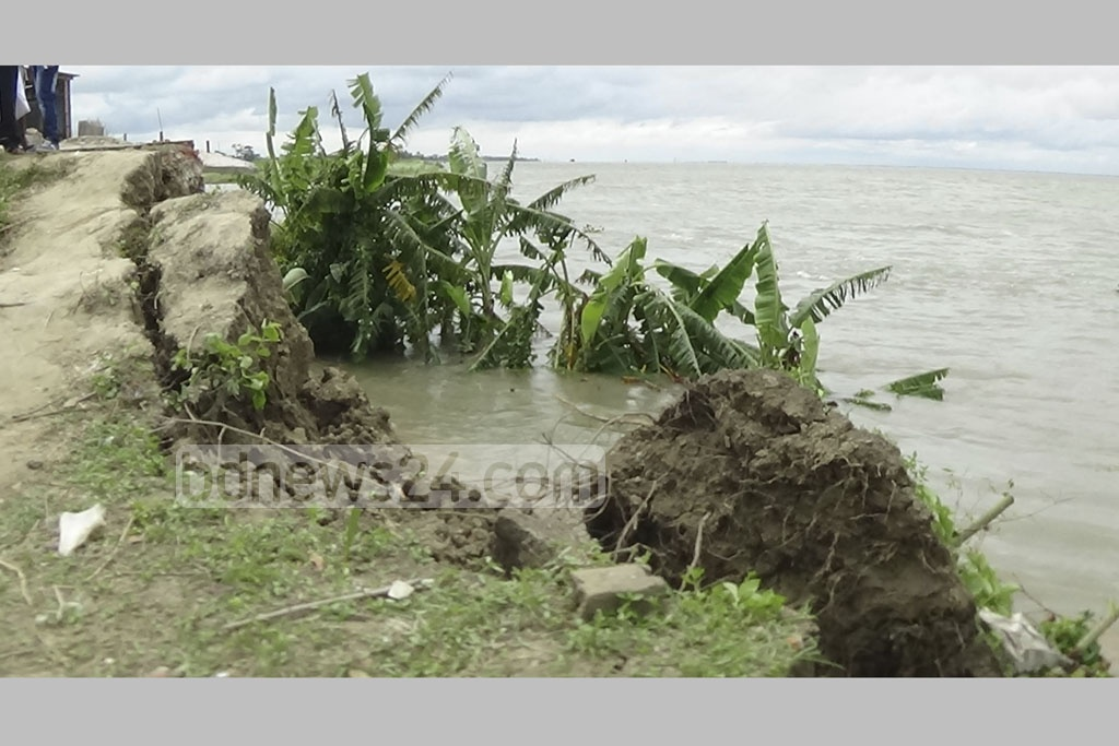 The photo of the Padma river erosion at Ishwarkathi village in Shariatpur's Naria Upazila was taken on Friday.